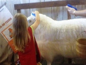 Fair's open; little ones head to the farm