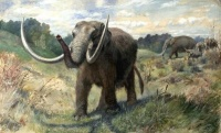 Presentation focuses on prehistoric Williamson County