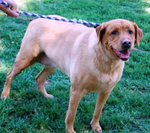 Ruby May, Casey and friends up for adoption