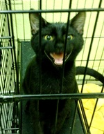 Black dogs, cats and kittens on sale at Black Friday event