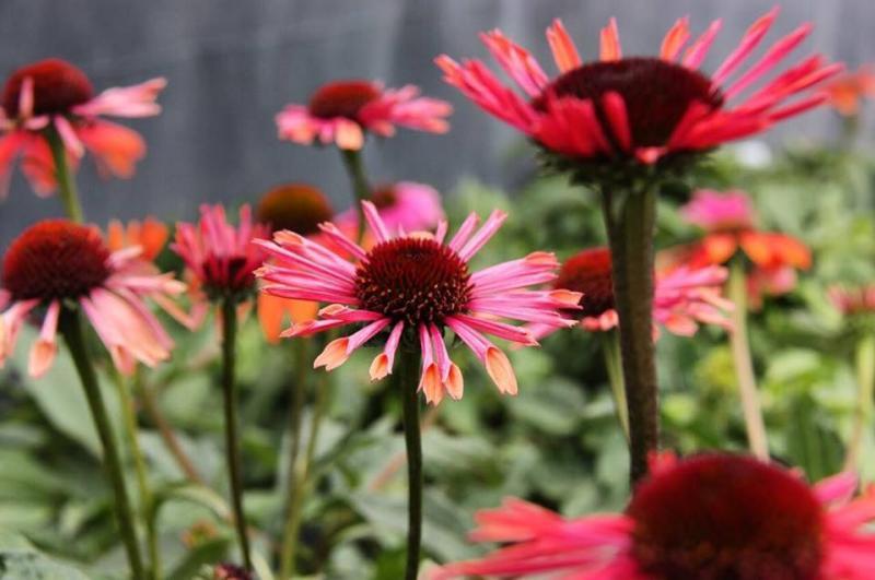 BUSINESS SPOTLIGHT: Start a spring project at Mark Bates Landscaping & Garden Center