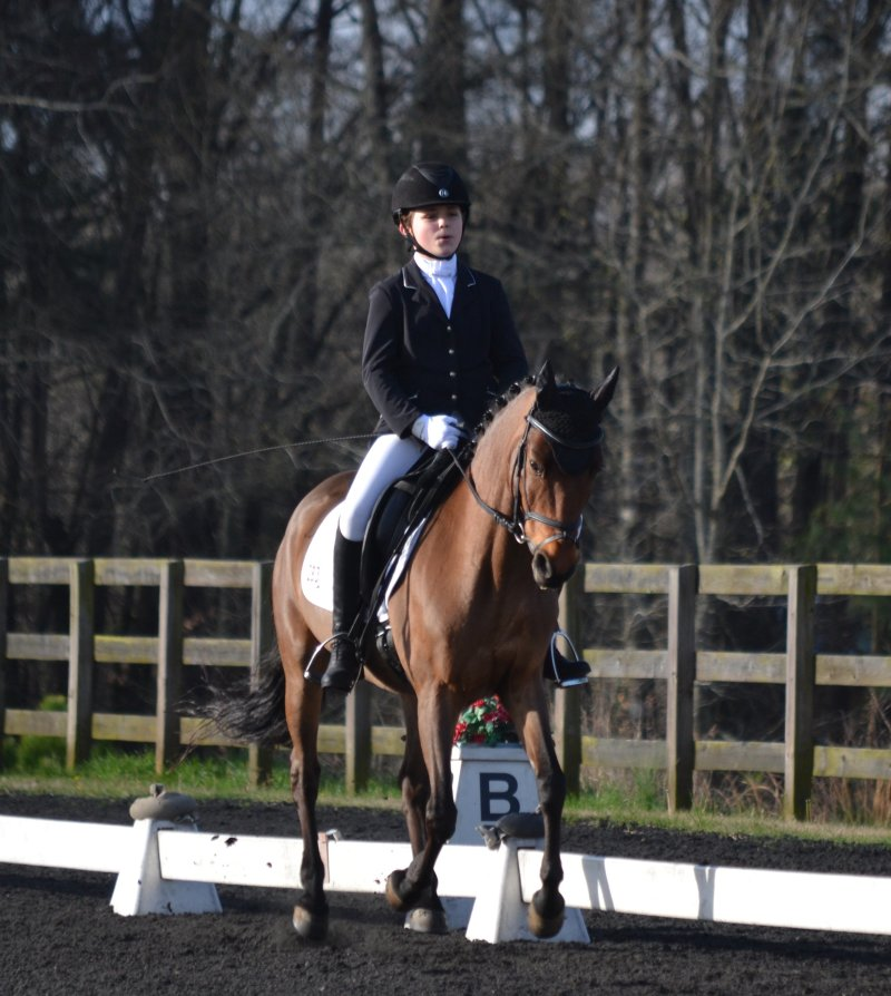 Tractor Supply Co. Arena at Harlinsdale hosting dressage show Saturday