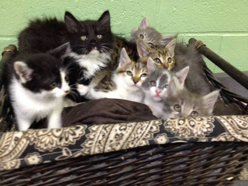 Right meow: WCAC needs kittens, cats to find new homes