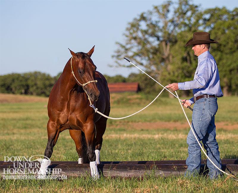 Horse Training Stock Photos - Image: 4633113 |Horse Training